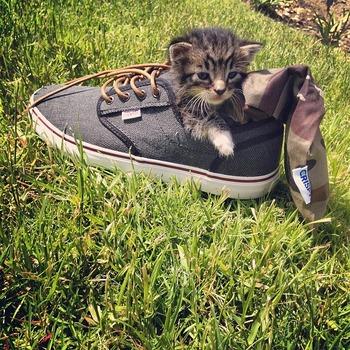 CRISPYと猫