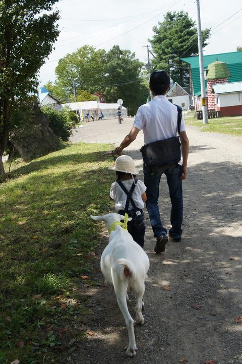 14)ヤギとじぃじとお散歩♡