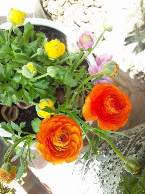 春の寄せ植え!