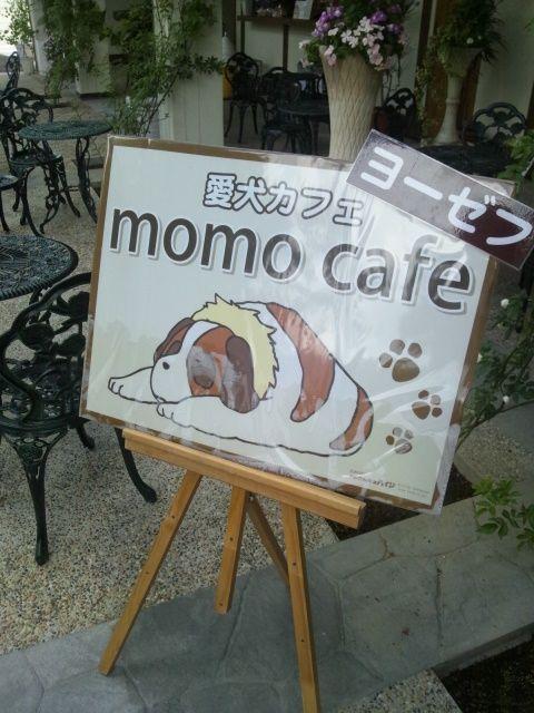momo cafe.jpg