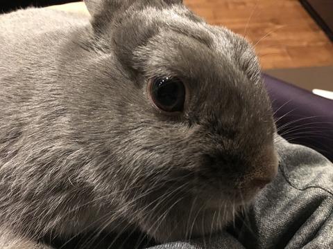 ウサギがケージを噛まなくするしつけ