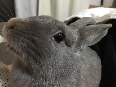 うさぎの変顔