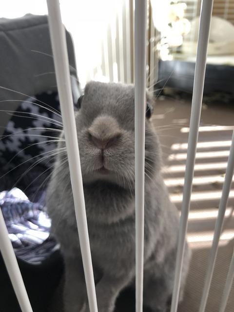 ウサコッツ、太っている疑惑につきまして -ウサギの標準体型の見分け方-