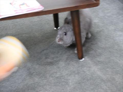 ウサギが何かを追いかける時 -遊びから学ぶ逃走術-