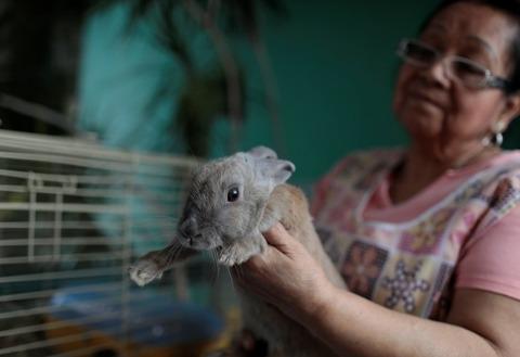 ベネズエラで、食糧危機対策にウサギが配布されるも、ペットになる