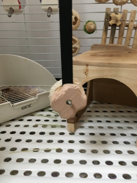 ウサコッツの新しいおもちゃ -ケージの天井からたらしました-