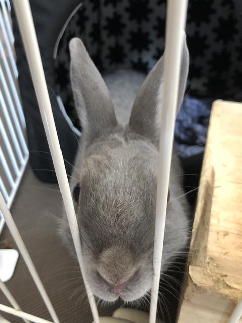 食欲が先か、嫌いなにおいが先か -あるウサギの苦悩-