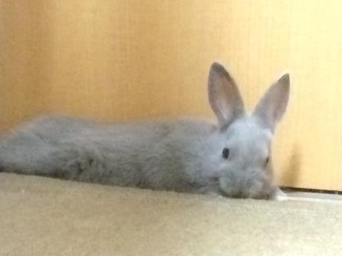 ウサギの縄張り