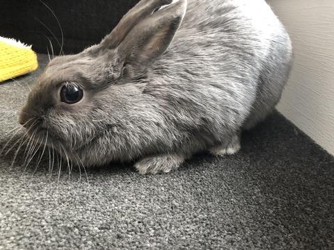 ウサギの空気清浄機機能