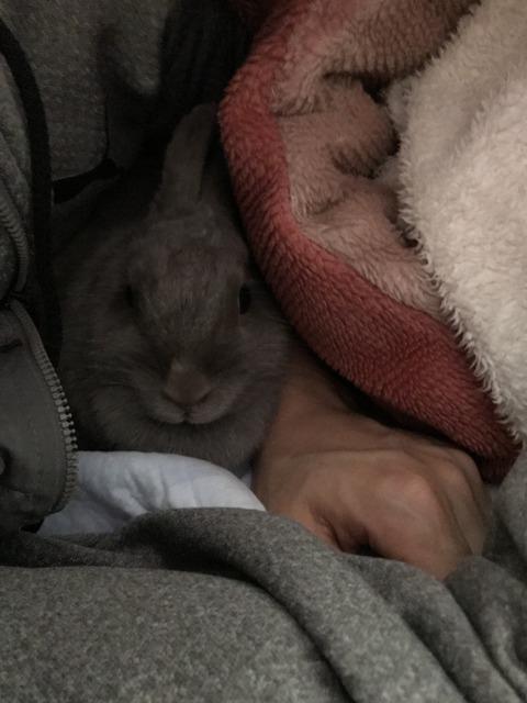 ウサコッツと一緒に布団で寝る