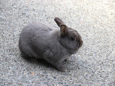 ウサギにとって、砂利は灼熱地獄 その2 -日陰で放牧してみました-