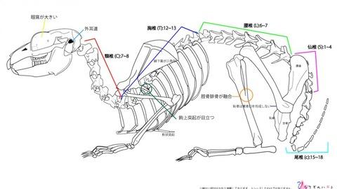 ウサコッツの新たな病気 -腰の骨の異常-