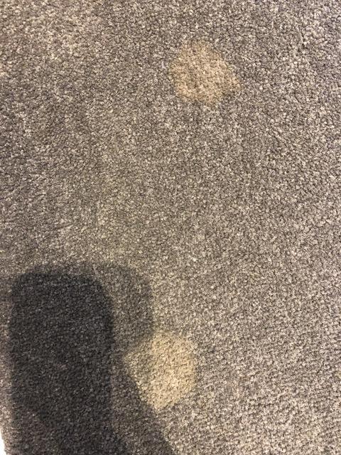 ウサギの尿が染みたカーペットをクリーニングする