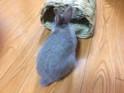 わらっこ倶楽部 トンネルハウス【穴掘り対策】