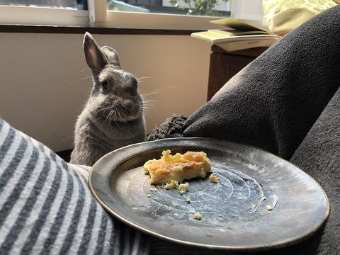 チーズケーキを狙うウサコッツ
