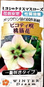 ミヨシピコティー咲き桃筋花01