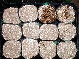 11_種まき_用土を1cm覆う
