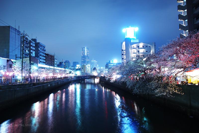 大岡川:夜桜
