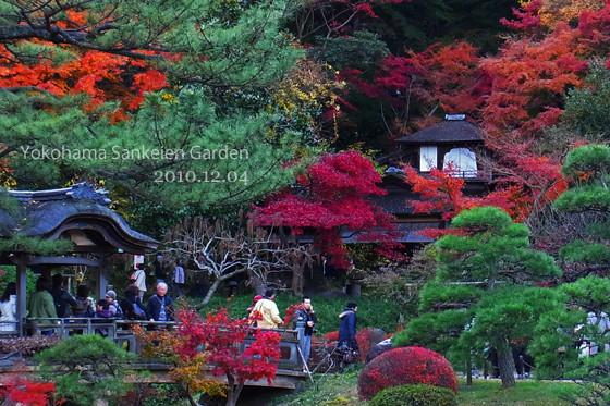 紅葉:横浜三景園