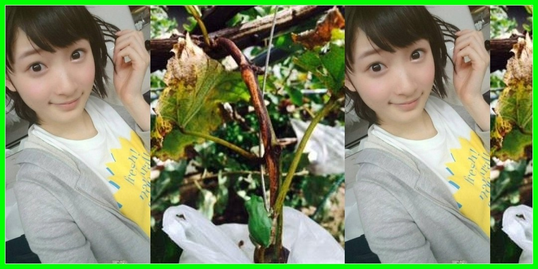 今日のブログ・ツイッター Juice=Juice 2016/01/16