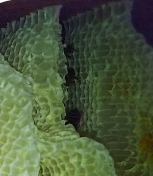 蜂の生存 (2)