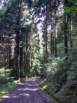横峰寺 星が森「石鎚山遥拝所」へと続く林道