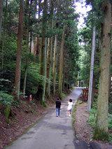 横峰寺 老木が茂る山道を行く