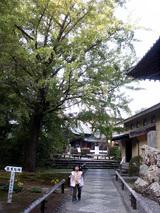 竹林寺 美しい庭園と大きな銀杏のある参道を行きます