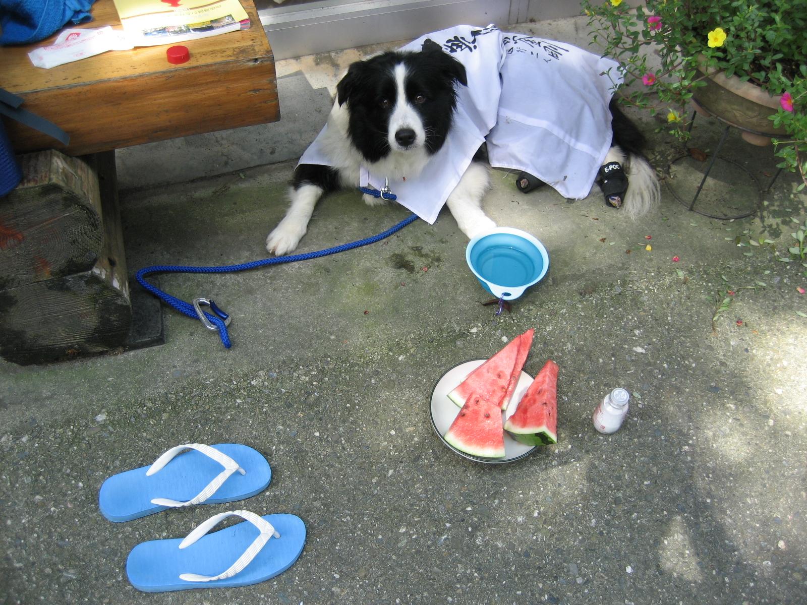 犬と遍路みち:徳島市内へ - live...