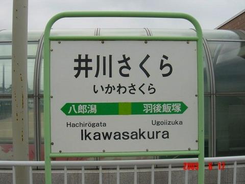 ikawasakura