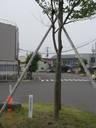 odate_shibuya