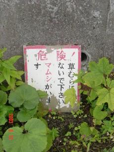 hariusu_mamushi