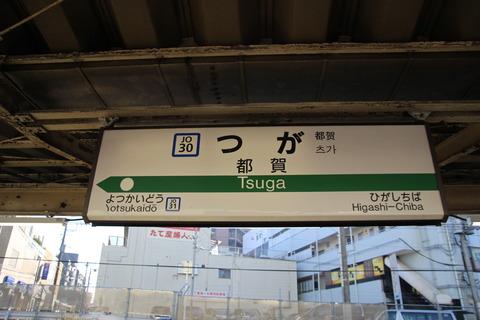 tsuga