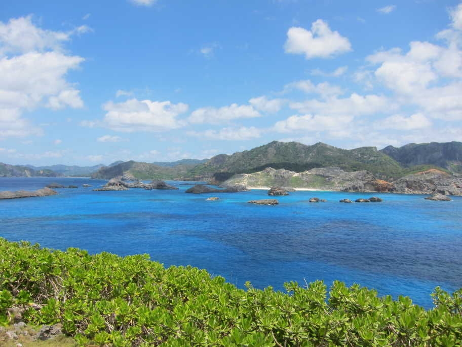 小笠原諸島の自然の画像 p1_33