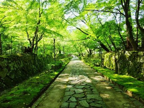 11・新緑の石畳・金剛輪寺