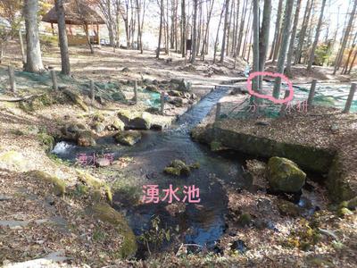 湧水池から分水枡へ流れる