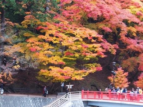 有名な五色紅葉