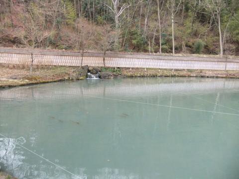 中級武家屋敷の泉水池