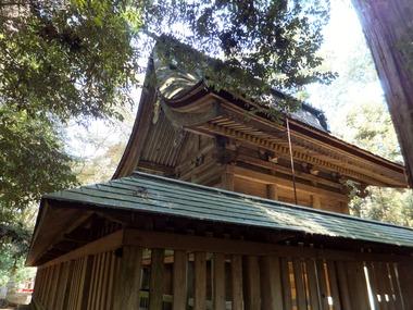 斜め後ろから社殿を見上げる