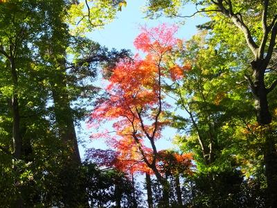 3・野草園近くの紅葉