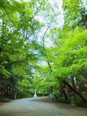 新緑萌える参道