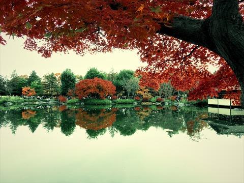 20 昭和記念公園 日本庭園の色づき