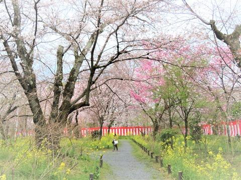 �有料桜苑