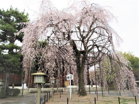�阿亀桜看板正面