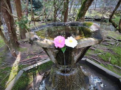 法然院手水鉢に二輪の椿