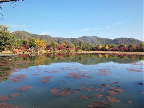 大沢の池 秋景色
