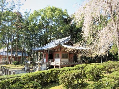�醍醐寺不動堂と桜