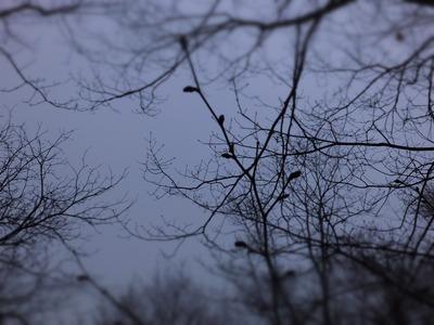 朝靄のなか、芽吹き