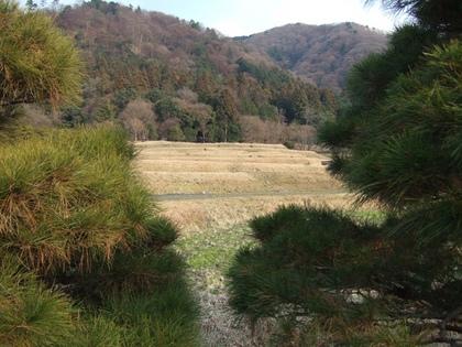 赤松並木の間から見える田畑