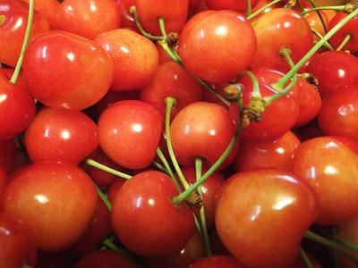 豊作の佐藤錦・つややかな紅いさくらんぼ